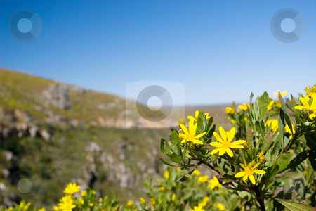 Flowers #5 stock photo, Yellow Wild Flowers by Sean Nel
