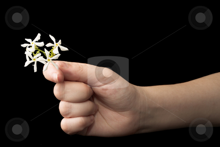 Hands #18 stock photo, Hand holding a flower - black background, copy space by Sean Nel