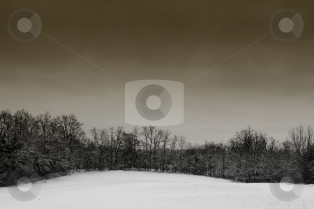Snow Landscape #1 stock photo, Leafless trees on a snowy landscape in Germany - Brown Tone by Sean Nel