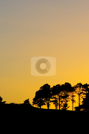 Silhouette #3 stock photo, Silhouette of trees at sunset or sunrise by Sean Nel
