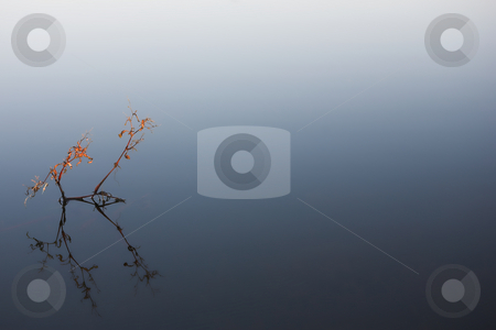 Flyfish #29 stock photo, Water plant in a dam. by Sean Nel