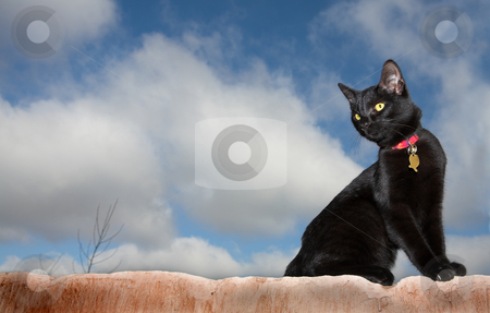 Cats #01 stock photo, Black cat on a wall by Sean Nel