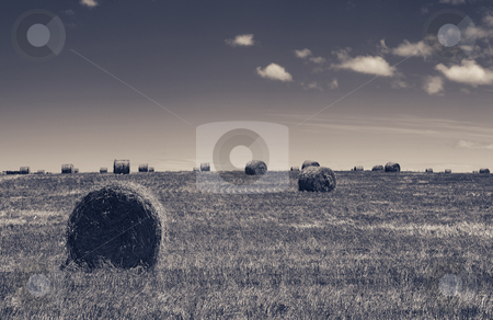 Haybales #3 stock photo, Rolls of gathered hay on the lands - High Contrast Black and White (browntone) by Sean Nel