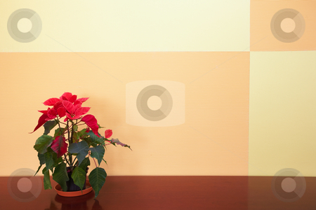 Small plant in office stock photo, Small plant against an orange block pattern in an office on a brown cabinet top by Sean Nel