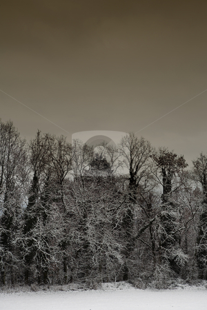 Snow Landscape #5 stock photo, Leafless trees on a snowy landscape in Germany - Brown Tone by Sean Nel