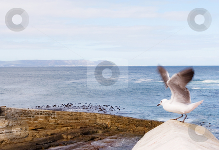 Bird #7 stock photo, Seagull sitting on wooden post - copy space by Sean Nel