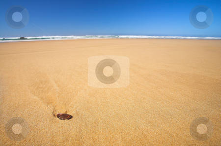 Little shell on a flat beach with Blue Sky stock photo, The wide flat beach at the Noetzie reserve, Western Cape, South Africa - Shell in the foreground, Shallow Depth of Field by Sean Nel