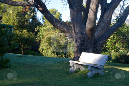 Plants #6 stock photo, Lovers bench under a leafless tree, winter - Knysna, South Africa by Sean Nel