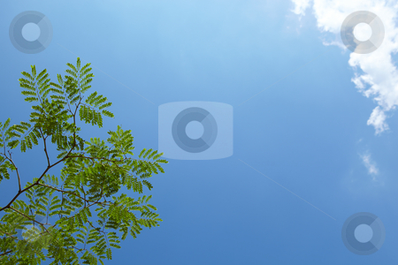 Tree branch against a sky in spring stock photo, Tree branches against a beautiful blue sky in spring. Can be used as a background by Sean Nel