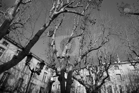 Buildings in Aix-en-provence stock photo, Trees in front of a building in Aix-en-provence, France. Black and white by Sean Nel