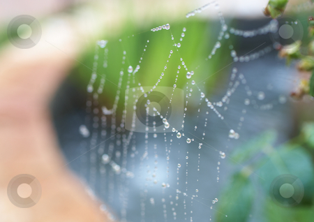 Spiders web stock photo, Water drops on a spiders web after early morning rain, Very Shallow Depth of Field by Sean Nel