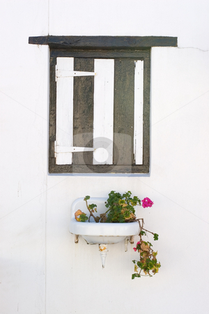 Window #3 stock photo, Pink flowering plant in a basin under a wooden window shutter by Sean Nel
