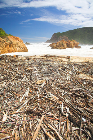 Driftwood at The Heads in Knysna stock photo, Beach covered in driftwood at the bay opening of The Heads in Knysna, Eastern Cape, South Africa by Sean Nel