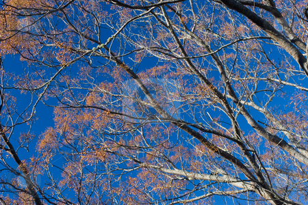 Plants #8 stock photo, Tree in winter with orange berries by Sean Nel