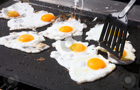 Eggs on a frying pan stock photo, Fresh eggs being fried sunny side up on a large frying pan. Most of the egg white has already cooked. Shallow Depth of Field, focus on front eggs and spatula (egg lifter) by Sean Nel