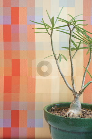 Small tree in office stock photo, Small tree against an orange block pattern in an office by Sean Nel