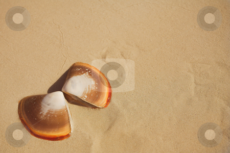 Butterfly shells on the beach in the wet sand stock photo, Two halves of a butterfly shell lying on wet sand on the beach next to the sea. Orange shells on brown sand with copy space on the right. by Sean Nel