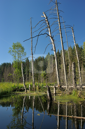 Wood lake stock photo, Landscape with lake and trees, the blue sky. by Vladimir Blinov