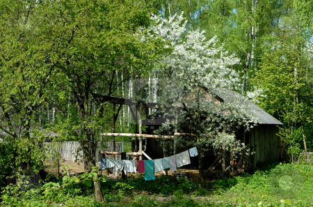 Rural landscape. stock photo, Backyard of the rural house in the spring and a blossoming tree about a shed. by Vladimir Blinov