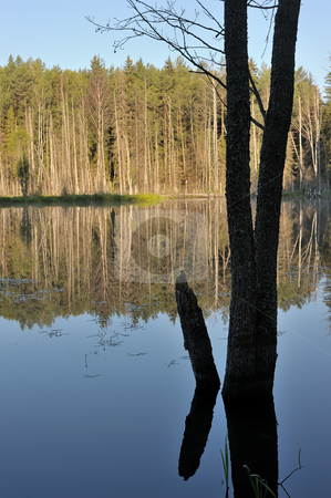 Wood lake stock photo, Landscape with lake and trees, an alder trunk in the foreground. by Vladimir Blinov