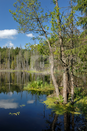 Wood lake stock photo, Landscape with lake and trees, the blue sky with clouds. by Vladimir Blinov