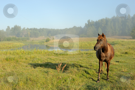 Horse at a sunrise stock photo, Landscape with a horse at a sunrise, in morning a mist. by Vladimir Blinov