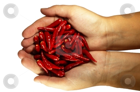 Hot chili pepper in the hands stock photo, Hot chili pepper in the hands. isolated on white by Oleg Blazhyievskyi