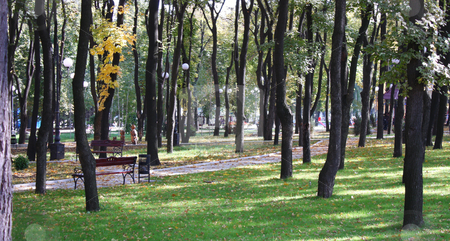 City park stock photo, Autumn city park a silent sunny day by Valerij Kotulskij
