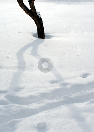 Snow and trees stock photo, The tops of the plants sticking out of the snow. by Vladimir Blinov