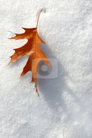 Leaf in the snow. stock photo, Brown leaf in November fell to an early snow. by Vladimir Blinov