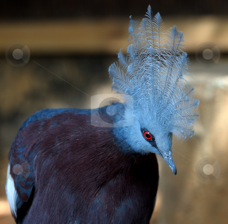 A bird with a plumage  stock photo, A bird with blue plumage and crest of feathers. by Vladimir Blinov