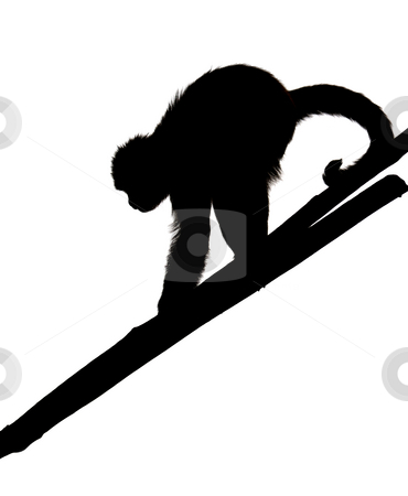Monkey  stock photo, A monkey in a zoo, game and asking for food, isolated. by Vladimir Blinov