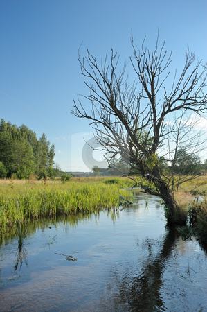 Stream and tree  stock photo, Summer landscape with stream and a dry tree. by Vladimir Blinov