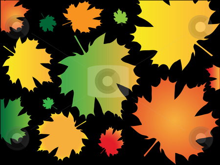 Background from autumn leaves stock photo, Colour leaves of maple during autumn season on black background by Alina Starchenko