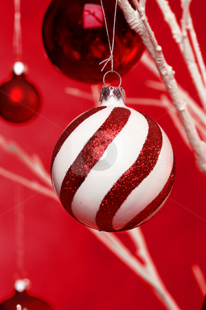 Hanging Christmas Balls stock photo, Christmas balls hanging from a white tree branches. Closeup with shallow dof by Leah-Anne Thompson