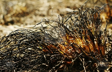 Burned grass stock photo, Fire in the nature  its a disaster, only ash, burned trees and grass on the ground by Oleg Blazhyievskyi