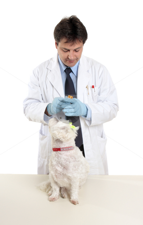 Vet opens pill bottle stock photo, Vet holding a bottle of prescription  pills ready to treat a pet dog by Leah-Anne Thompson