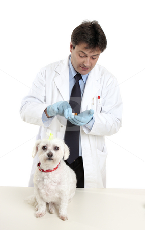 Vet with prescription stock photo, Vet with prescription pills medicine. by Leah-Anne Thompson