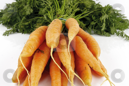 Bunch of Carrots stock photo, Bunch of young fresh carrots with green leafy tops on a reflective white background by Keith Wilson