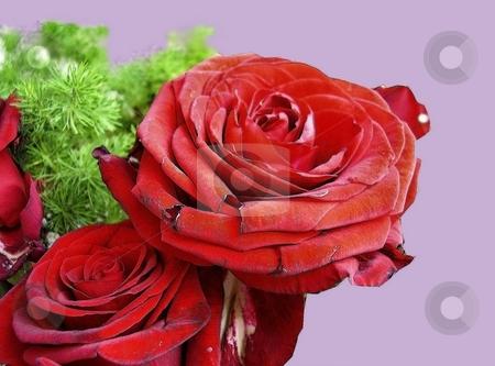 Roses stock photo, Roses by Sergey Gorodenskiy