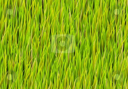 Green Grass Patch Background stock photo, Green Grass Patch Abstract Background Pattern Texture by Kheng Ho Toh