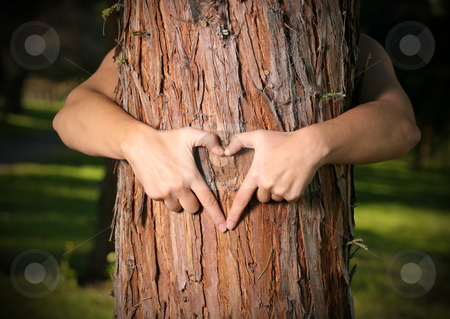 Tree Lover stock photo, A person who loves nature, saves nature or empowers people to grow and care for urban and community trees and forests. by Leah-Anne Thompson