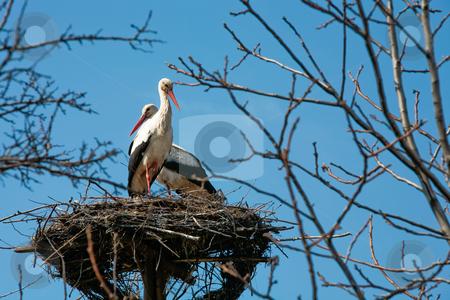 Stork stock photo, A stork standing in its nest, family of stork by Gennady Kravetsky