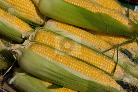 Corn stock photo, Food series: fresh and ripe golden corn by Gennady Kravetsky
