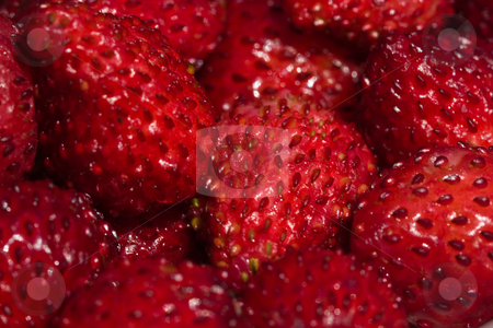 Strawberries stock photo, Fruit series: background of  ripe wild strawberries by Gennady Kravetsky
