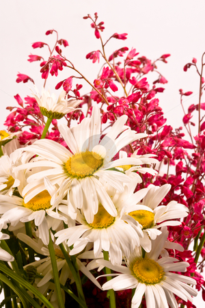 Camomile stock photo, Flower series: white camomile bouquet with small pink flower by Gennady Kravetsky
