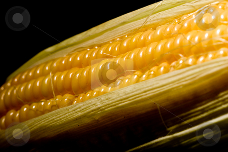 Corn stock photo, Vegetable serias: golden corn over black background by Gennady Kravetsky