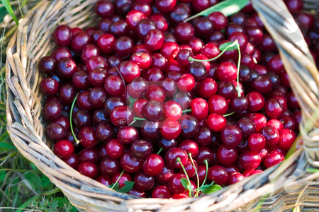 Cherry stock photo, Food series: basket of red ripe cherry by Gennady Kravetsky