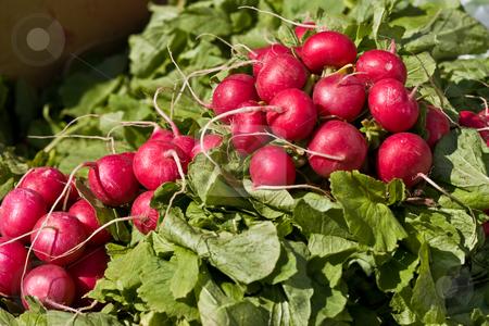 Radish stock photo, Food series: freshly grown spring red radish by Gennady Kravetsky