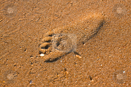 Footstep stock photo, Texture series: footstep of baby on wet sea sand by Gennady Kravetsky